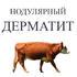 Нодулярный дерматит в Новосибирской области