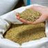 В начале периода посева озимых, напоминаем о требованиях к производству и продажи семян