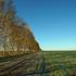 Свыше 13 тыс. га неиспользуемых земель вовлечено в сельхозоборот в Алтайском крае с начала 2020 года